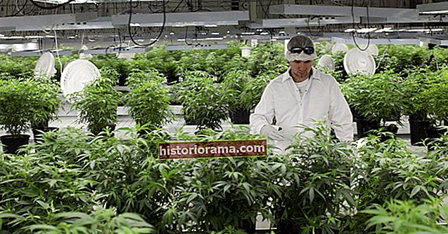 Всередині високотехнологічних лабораторій, які гарантують безпеку вашої законної марихуани