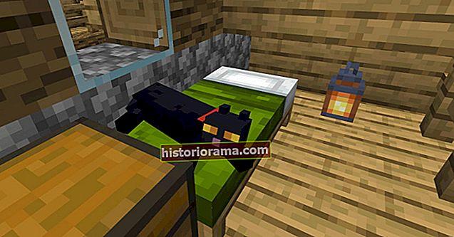 Як приручити кота в Minecraft