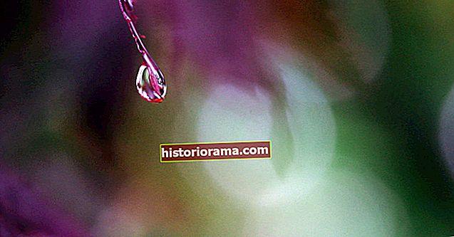 Jak fotografovat makro fotografii