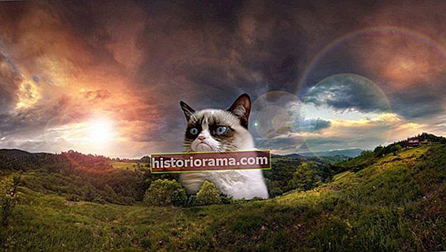 Тривалість життя мему: Підйом і падіння сварливого кота та інших Інтернет-знаменитостей