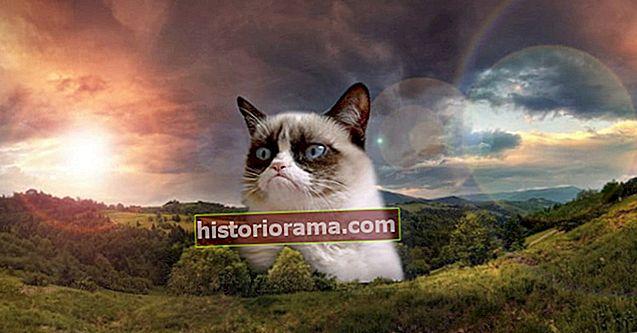 Приємне прощання з Грумпі Котом, найвідомішим котячим в Інтернеті